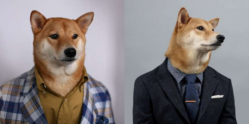 mens wear dog (5)