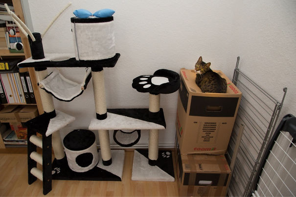 20 Best Examples Of Cat Logic 05