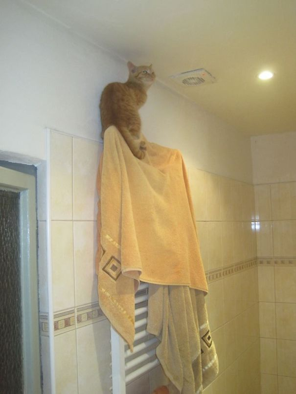 20 Best Examples Of Cat Logic 08