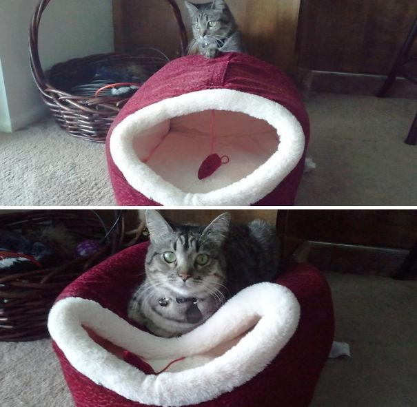 20 Best Examples Of Cat Logic 19